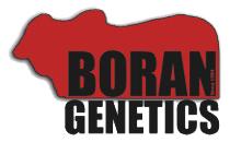 Boran Genetics -breeding-sales-bulls-cows-south-africa-kenya